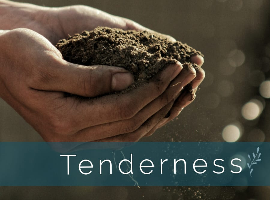 "A person holding soil in their hands. Text reads ""Tenderness"""
